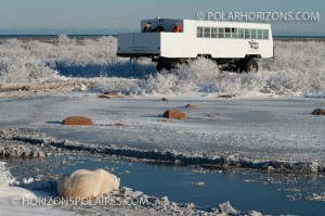 Observing polar bears from the tundra buggy's outer deck, Churchill, Manitoba