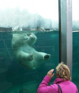 Colette observant un ours polaire au Zoo sauvage de Saint-Félicien. (c) Colette et Jean-Paul Monchablon